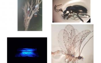 Influência da poluição luminosa nos insetos